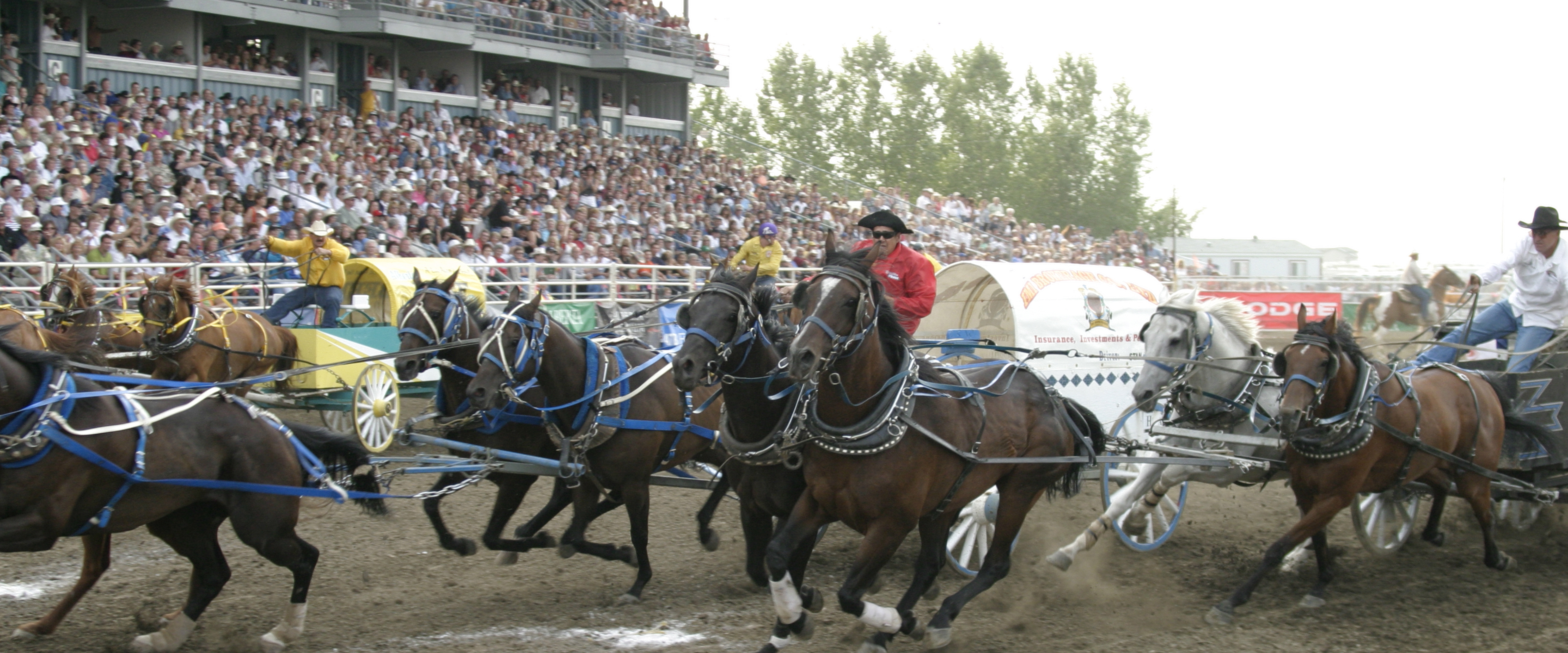 chuckwagons race at the Strathmore Stampede